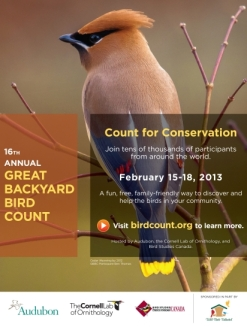 friday february 15 began the 2013 great backyard bird count which runs