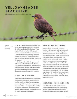 Must-See Birds of the Pacific Northwest  85 Unforgettable Species, Their Fascinating Lives, and How to Find Them from Timber Press (1)