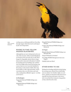Must-See Birds of the Pacific Northwest  85 Unforgettable Species, Their Fascinating Lives, and How to Find Them from Timber Press (2)