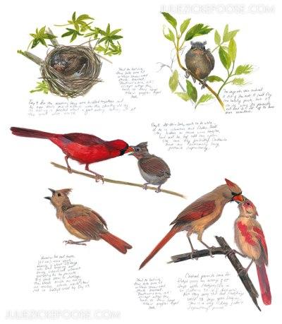 babybirds-cardinals